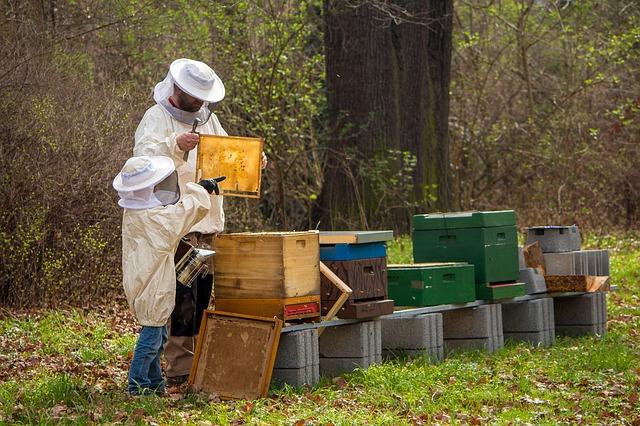 Ruche pour abeille