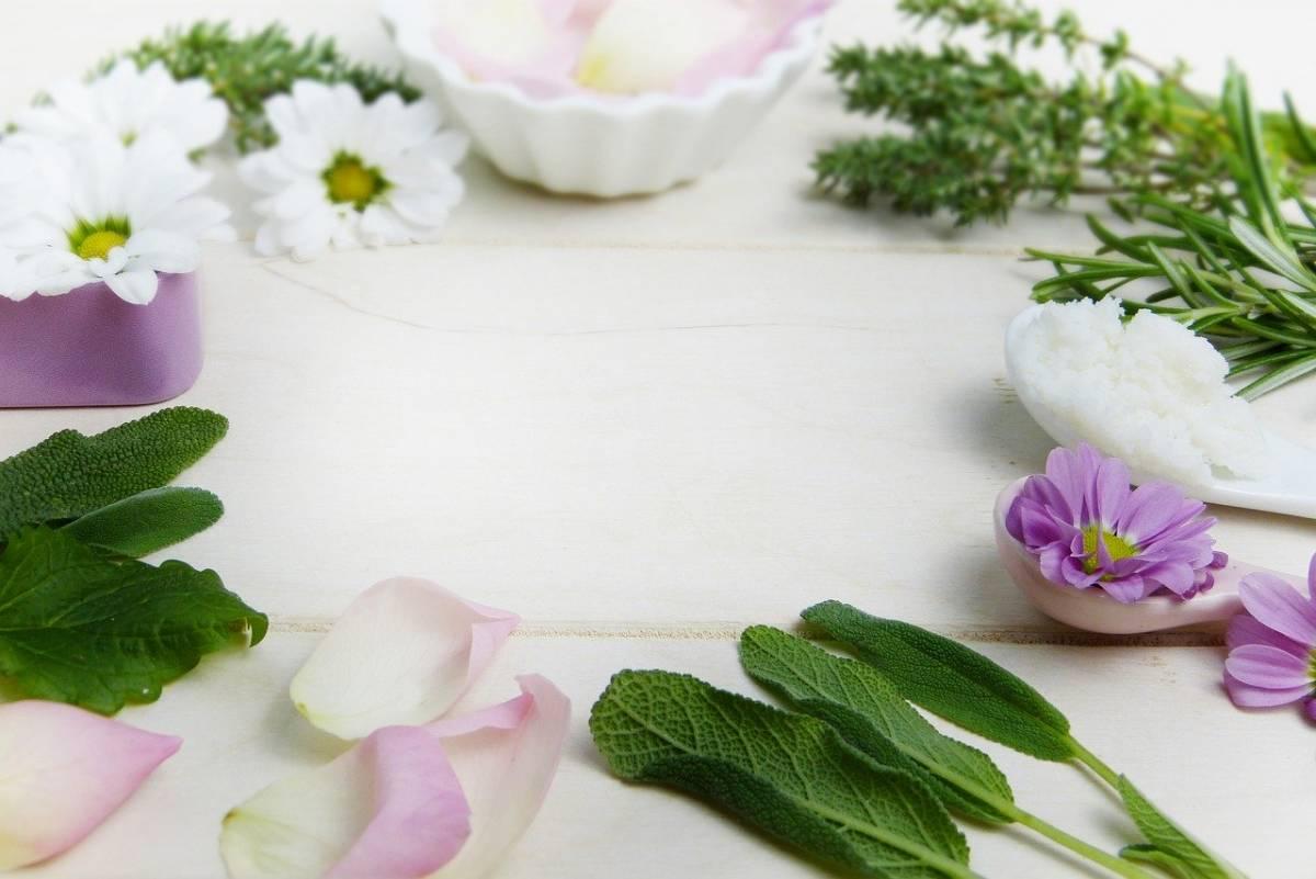 Phytothérapie - Plantes