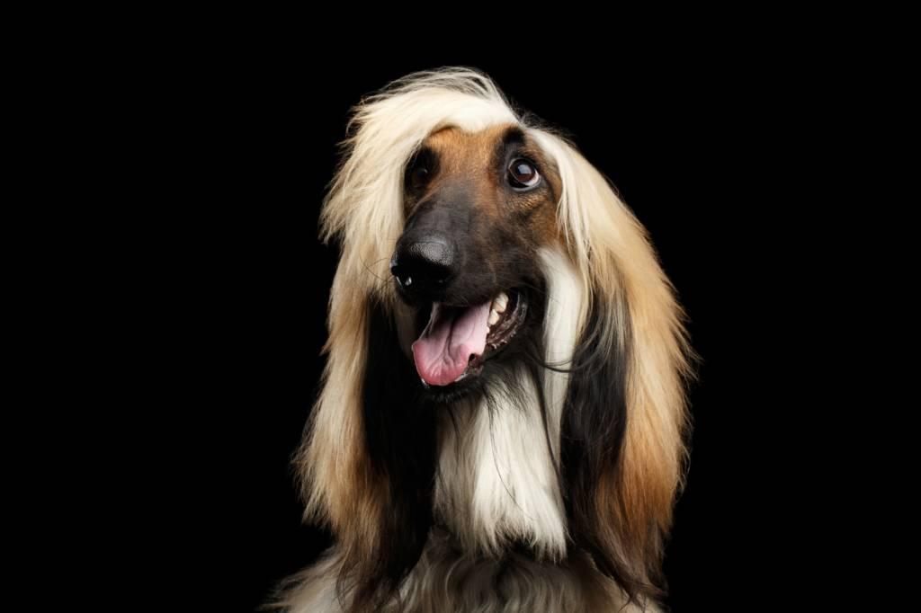 Certains chiens ont un poil très long