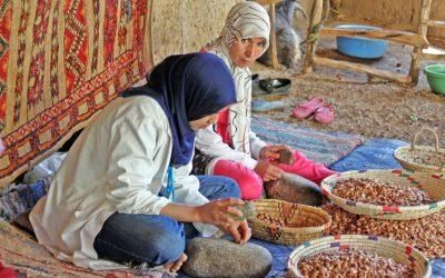 Maroc vert, le plan pour restructurer la filière de l'argan
