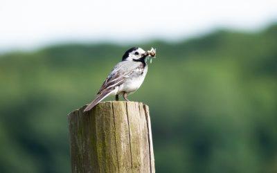 Observer les oiseaux dans la nature : nos conseils