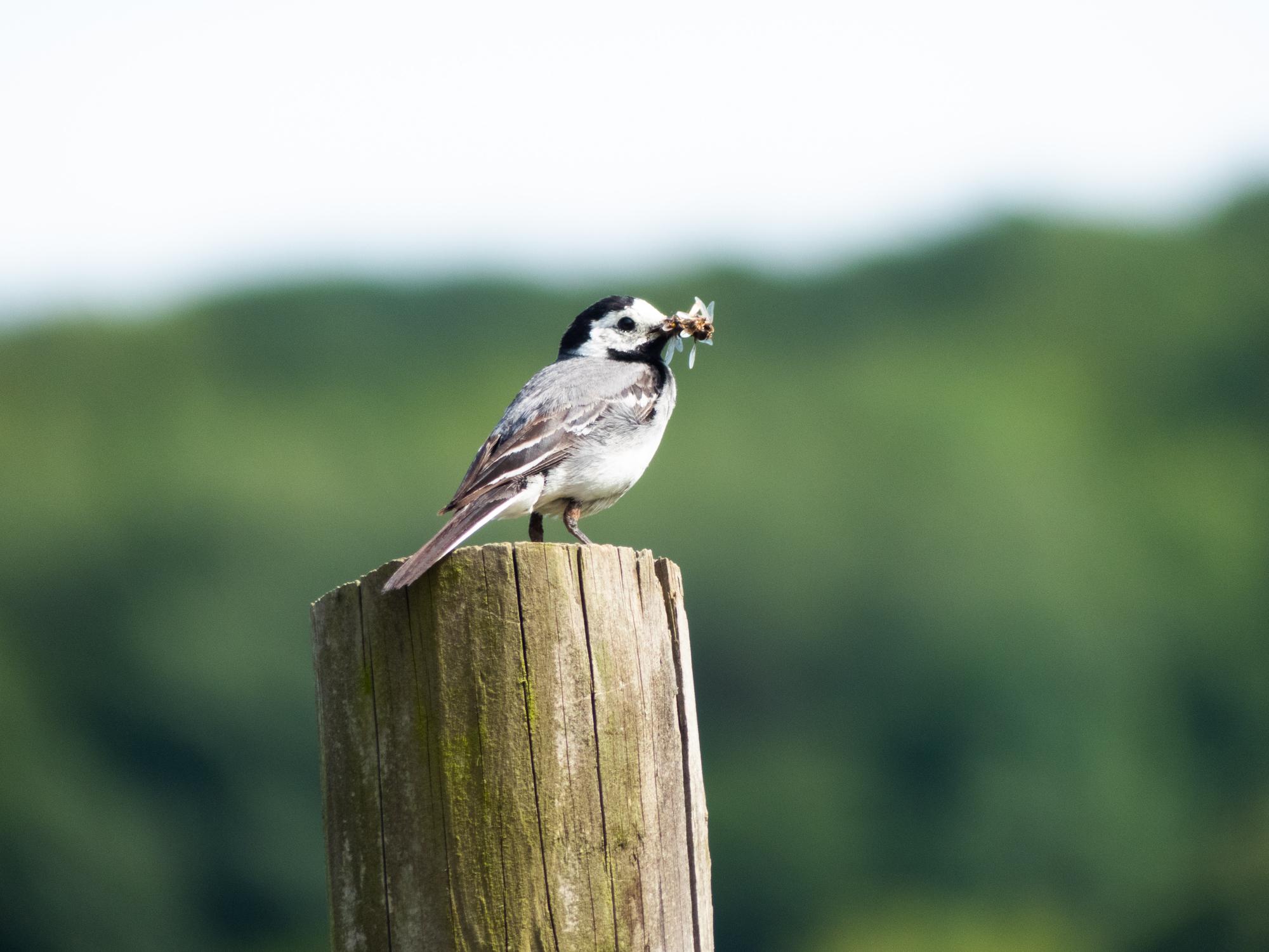 Savoir comment observer les oiseaux passe par un bon matériel ornithologique