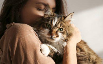 La thérapie animale nous fait du bien