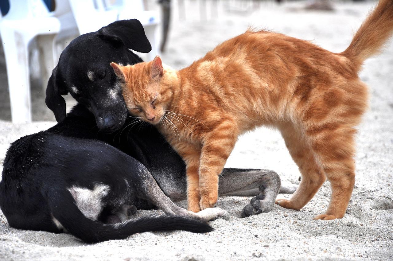 Chien et chat sur Prends en Soin