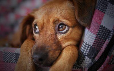 La pharmacie en ligne, c'est pratique pour prendre soin de vos animaux