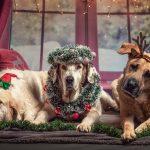 3 cadeaux de chien