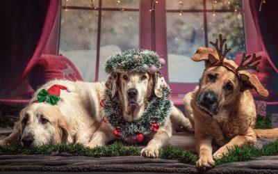 3 idées de cadeau à offrir à un chien