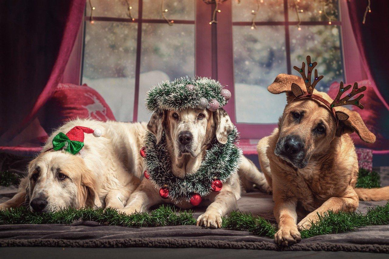 Comment offrir à un chien un cadeau qui fasse mouche ?