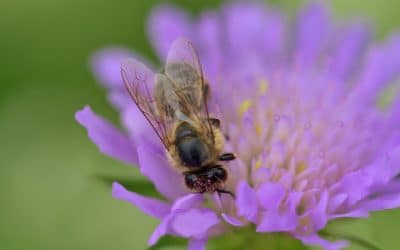 Fabriquez votre bee wrap à la maison !