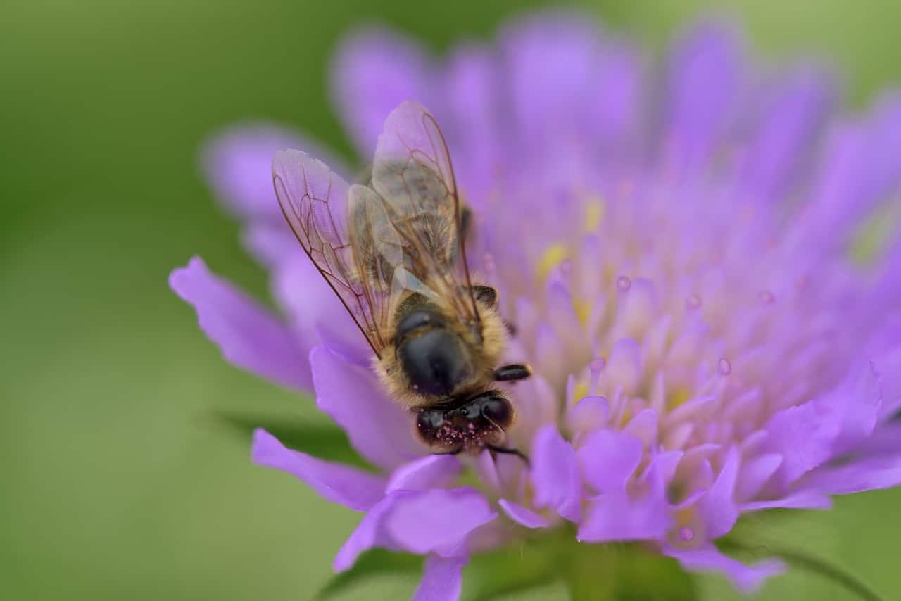 Fabriquez votre bee wrap à la maison