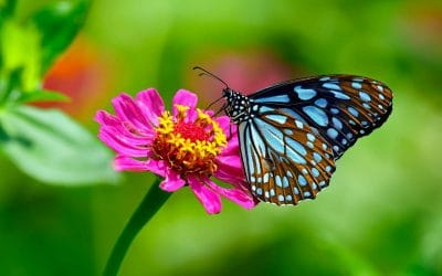 Pourquoi faut-il protéger les insectes butineurs ?