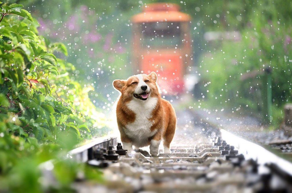 Quand notre chien va bien, tout va bien !