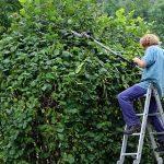 Voyons ici l'importance d'une taille de formationque l'on peut faire sur un jeune arbre ou sur l'ensemble des végétaux de votre maison écolo.