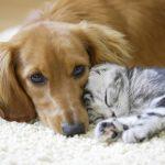 Quelle est la mutuelle pour animaux idéale ? Est-ce vraiment rentable ? Quelle compagnie choisir ? Les réponses ici, à portée de clic !