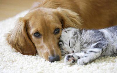 Mutuelle pour animaux : comment faire le bon choix ?