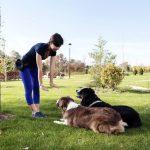 Quelles sont les règles essentielles à respecter pour mener à bien l'éducation de votre chien et entretenir une relation harmonieuse avec lui ?