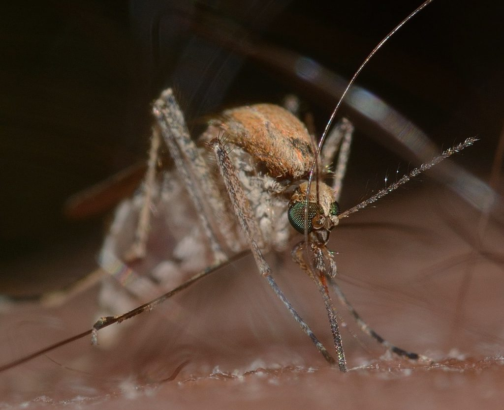 Découvrir les remèdes naturels contre les moustiques en 2021