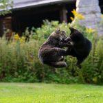 Comment protéger son chat des attaques d'autres chats ? Pour bien répondre, il faut comprendre ce qui pousse les chats à se battre entre eux.
