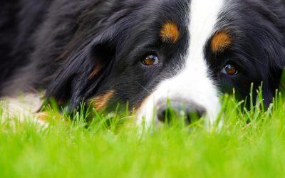 3 méthodes pour éduquer les chiens, y compris le collier anti-aboiement