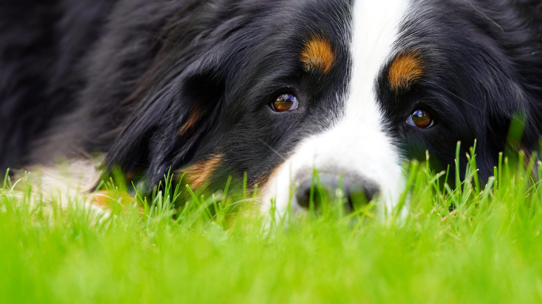 Apprenez comment vous pouvez prendre soin de votre chien à la maison. Comprend 3 méthodes d'éducation incluant le collier anti-aboiement et plus encore !